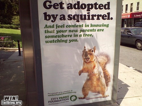 adoption advertisement clever squirrel