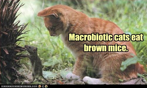Macrobiotic cats eat brown mice.