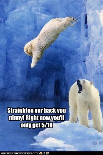 coach diving olympics polar bears scoring - 6353228032