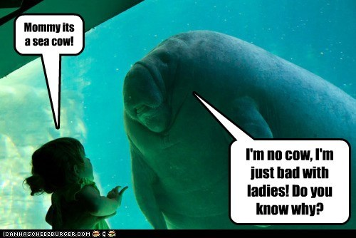 Mommy its a sea cow! I'm no cow, I'm just bad with ladies! Do you know why?