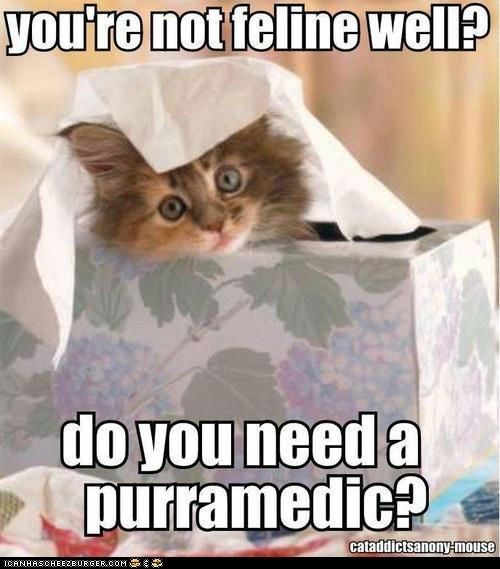 Cats,feel better,felines,paramedics,puns,sick,squee,sweet,tissues