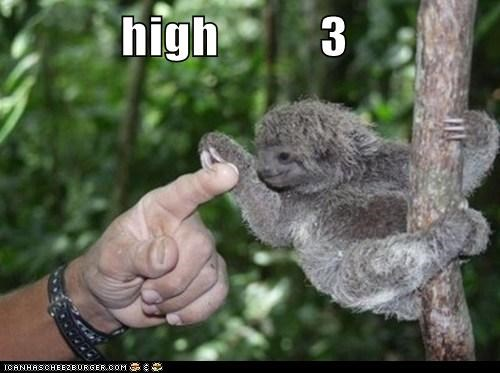 baby animals,captions,finger,fingers,grab,high five,high fives,humans,sloth,sloths,squee,three
