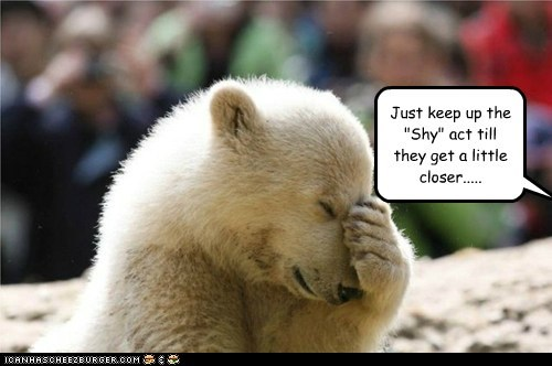 act,cub,eating,facepalm,hiding,plan,polar bear,shy,strike