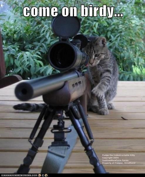 bird,gun,kill,murder,sniper