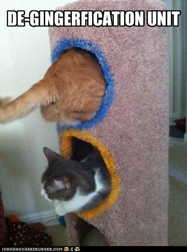 cat tree change ginger redhead science unit