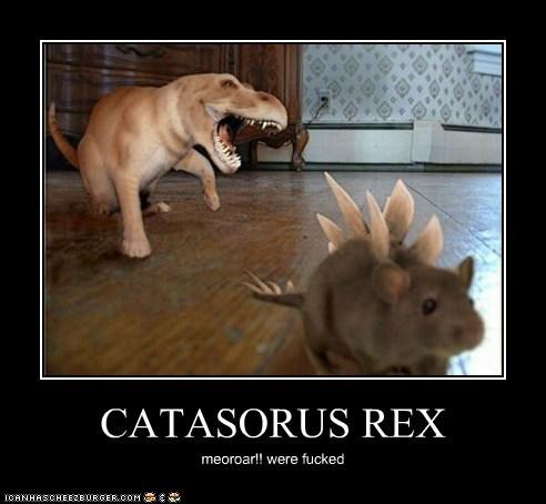CATASORUS REX meoroar!! were fucked