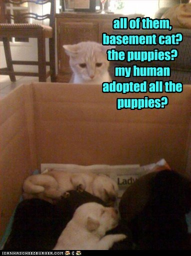 all of them, basement cat? the puppies? my human adopted all the puppies?