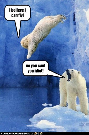 diving falling flying i believe i can fly ice idiot polar bears wrong - 6355157760