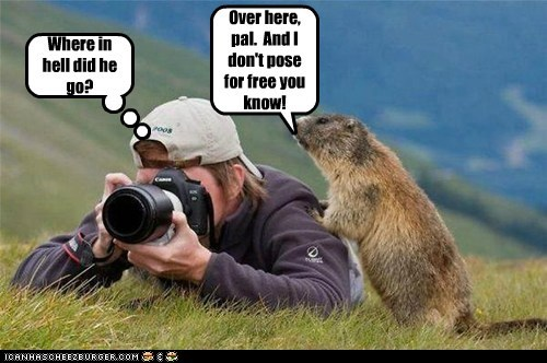 agent,camera,gopher,lost,model,pay,photographer,pose,prairie dog