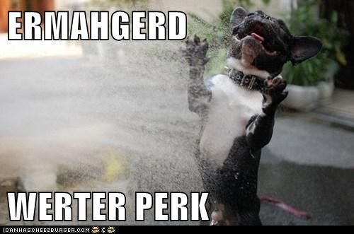 best of the week,captions,dogs,Ermahgerd,french bulldogs,Hall of Fame,sprinkler,water park