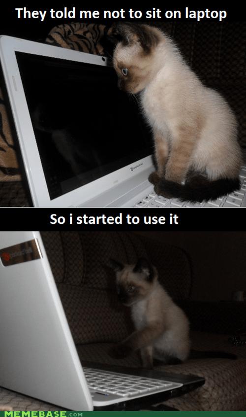 Clever Cat laptop sitting pets cute - 6355292928