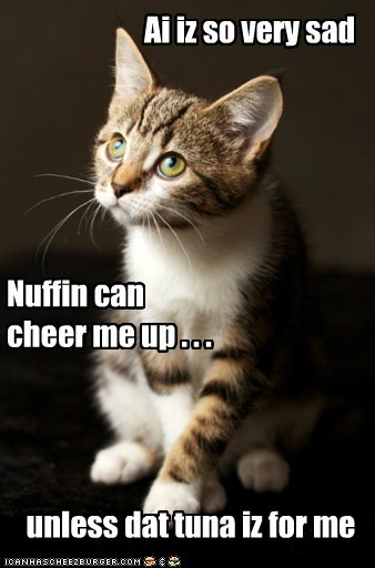 Ai iz so very sad Nuffin can cheer me up . . . unless dat tuna iz for me