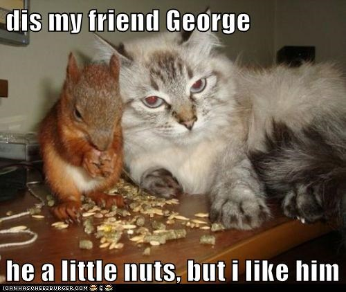 captions,Cats,crazy,friend,friends,hungry,lolcats,nuts,puns,squirrel,squirrels