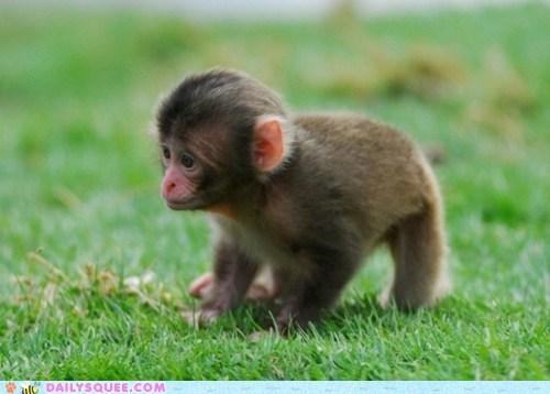 baby cute furry lost monkey tiny - 6355821824