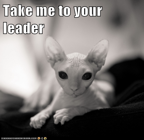 alien,Aliens,Cats,hairless,leader,lolcats,Mars,martian,nekkid,space,sphinx,take me to your leader,ufo