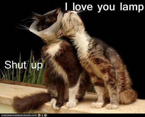 best of the week Cats cone of shame i love you lamps lolcats shut up - 6355839744