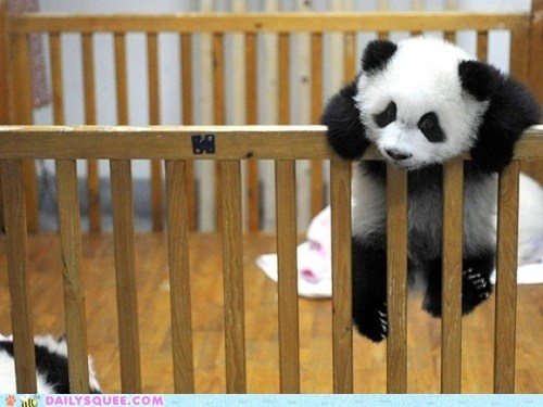 baby crib great escape Hall of Fame panda bear - 6356159488