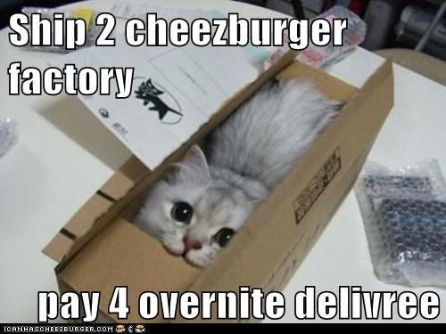 Cheezburger Image 6356230144