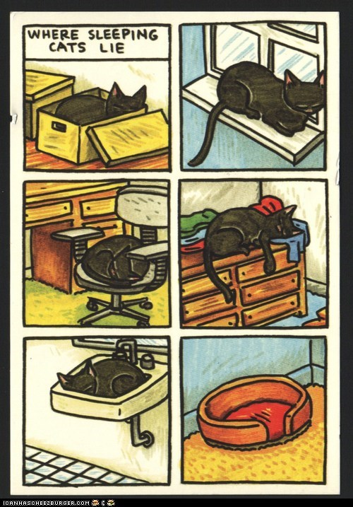 annoying,beds,cat beds,Cats,comfort is relative,comics,illustrations,sleeping