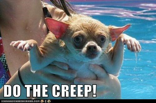chihuaha dance do the creep dogs swimming wet - 6356526592