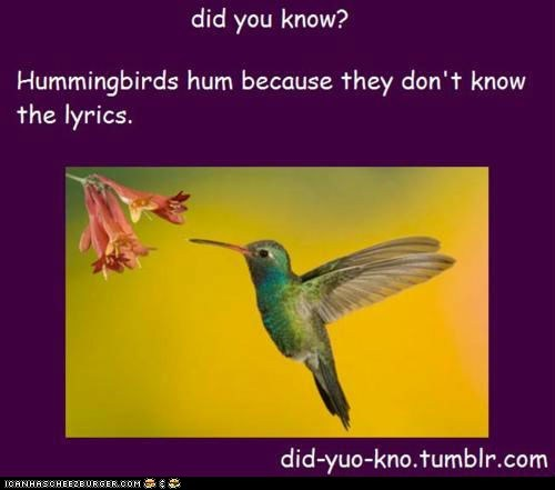 false humming hummingbirds lies lyrics Music wat wrong wtf - 6356659456