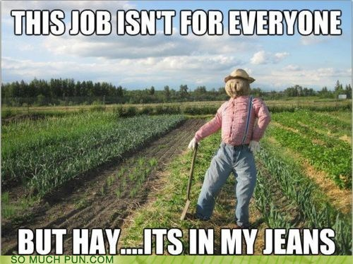 double meaning,genes,Hall of Fame,hay,Hey,homophones,jeans,job,literalism,scarecrow