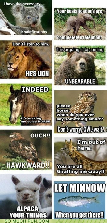 alpaca,animal puns,animals,bear,elephant,giraffes,hawk,horse,koala,lion,minnow,Owl,variations on a theme