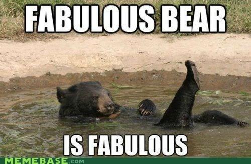 bear,fabulous,Memes,pride