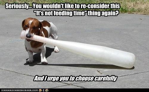 bat dachshund dogs food reconsider threat - 6359038464