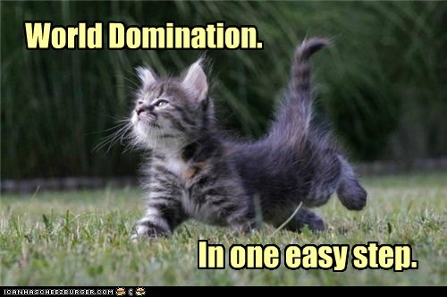 adorable,cute,world domination,cat