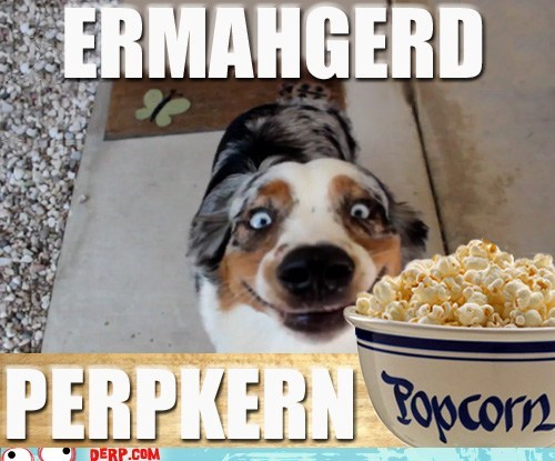 best of week derp Ermahgerd goggie Popcorn - 6359590400