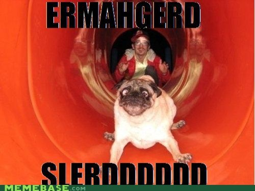 best of week derp does not Ermahgerd goggie sliding - 6359653632