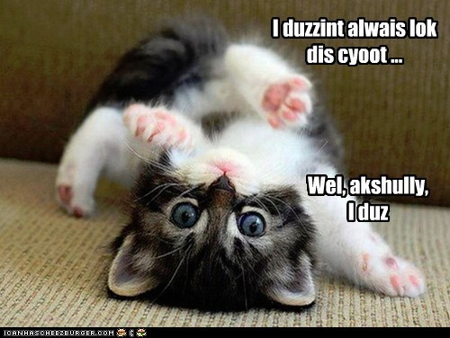 adorable aww caption Cats cute roll - 6359748096
