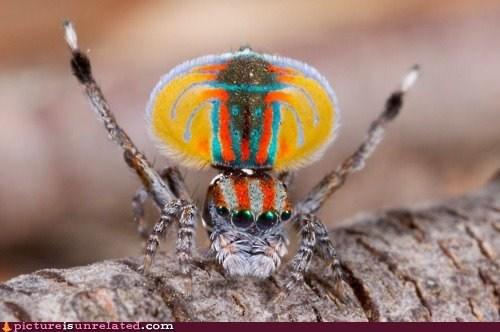 best of week spiders wtf - 6359781632