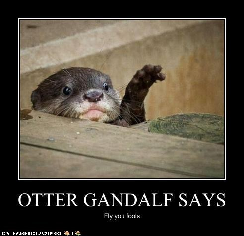 captions,fly you fools,gandalf,Lord of the Rings,otters,quotes,very demotivational,wizards