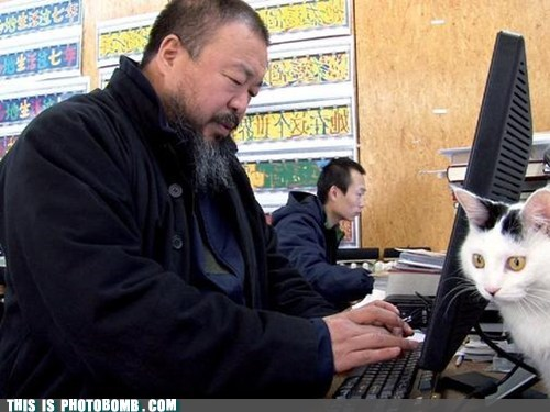ai wei wei,Animal Bomb,artist,cat,computer,never unsee