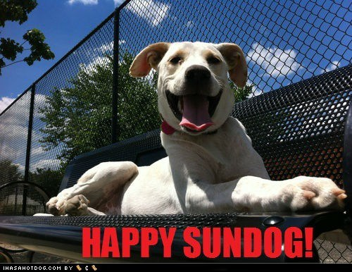 dogs happy sundog sunday Sundog what breed - 6360090624