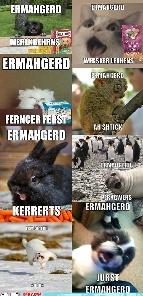 animals best of week cute derp ermagherd gersberms