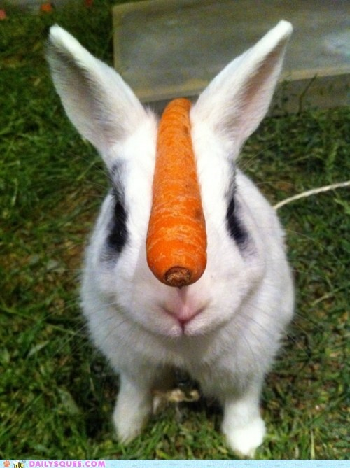 balance carrot happy bunday treat trick