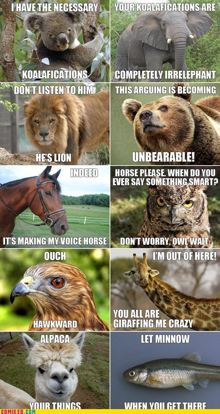 animals,best of week,puns,the internets