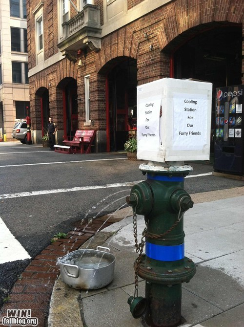 fire hydrant,fountain,pets,Random Acts Of Kindness,summer
