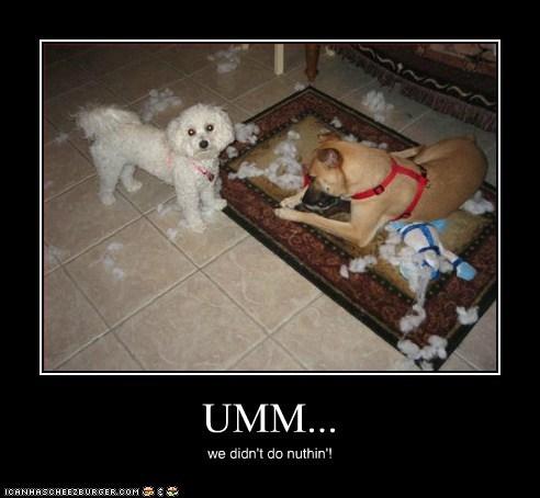 UMM... we didn't do nuthin'!