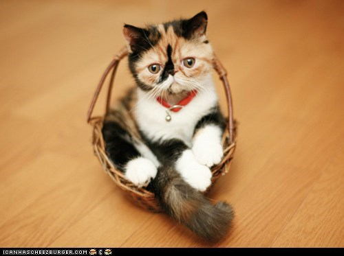 baskets Cats cyoot kitteh of teh day kitten sitting - 6360837632