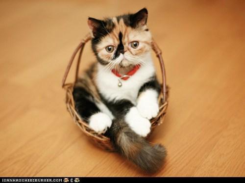 baskets Cats cyoot kitteh of teh day kitten sitting - 6360837632