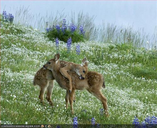 deer bambi - 6360996864