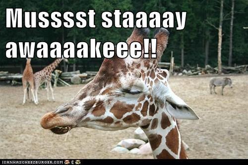 giraffes monday must sleepy tired - 6361552896