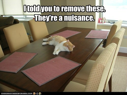 annoying,dining room,lolcat,nuisance,placemat,servant,table