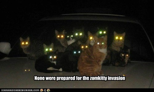 car Cats glow horde invasion kitty laser laser eyes lolcat lolcats zombie