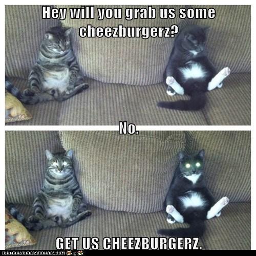 Cheezburger Image 6362649856
