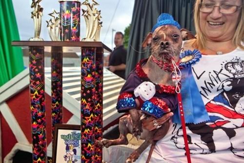 mugly worlds-ugliest-dog - 6362691328